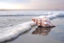 Beautiful* Sea / by Katsue Watanabe