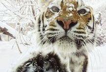 Animals / by Trinity Rodriguez