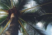 All things Palm / My love affair with palm trees, leaves, fronds..you name it.