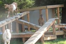 Goat Care / Things to Keep My Goat Herd Healthy and Happy
