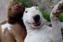 Śmieszne Zwierzaki