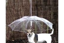 Super Cool Pet Products