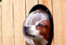 Modern Dog Projects / Cool pet ideas for the modern dog!