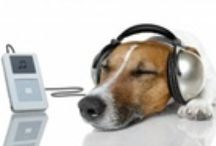 Doggie Info, Tips and Tricks / Anything from safety info to cool tips and tricks about your dogs!