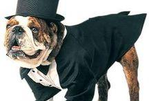Fashionable Pups