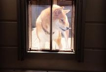 Dog Doors - Our Products / Pictures of the various pet doors and accessories we offer at plexidors.com !