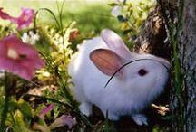 •♥✿♥• Bunnies •♥✿♥•