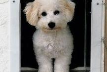PlexiDor Customer Photos / Real Customers and their PlexiDor Pet Door Photos