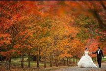 Inspiration: Herbst Hochzeit / Ob fallende, bunte Blätter, Kürbisse oder Äpfel und Nüsse - der Herbst hat vieles zu bieten. Eine Hochzeit passend zur Jahreszeit liegt deshalb Nahe - insbesondere bei den tollen Hochzeitsbildern. Lasst Euch auf unserer Pinnwand inspirieren!
