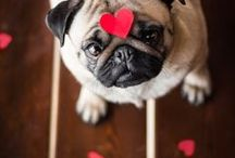 Valentine's Day for Pets!