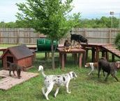 Cool Yards for Dogs