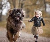 We Love Giant Dogs! / Showing some love for the extra large dog breeds in our lives!
