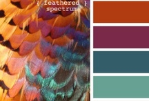 color schemes / by MacKenzie Brown