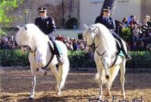 Horses / Caballos / fotografías de caballos / by Otilio Javaloyas