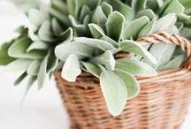 ◕Fresh Herbs / Mediterranean Region reach in herbs