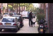 Videoblogs & Voorlichting / Er zijn een hoop soorten hindernissen die een geleidehond moet nemen om zijn baas te begeleiden. Bekijk vanuit het unieke perspectief van de geleidehond met welke uitdagingen hij dagelijks geconfronteerd wordt.