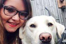 Blindengeleidehond / Onze blindengeleidehonden maken hét verschil voor onze cliënten. Een blindengeleidehond leidt zijn baas soepel om alle hindernissen op de weg heen. Hij brengt zijn baas op commando voortvarend en kwispelend naar de bushalte, stationstrap of informatiebalie. Hier vind je video's en verhalen over onze blindengeleidehonden in opleiding en aan het werk.