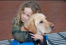 Autismegeleidehond / Een speciaal getrainde autismegeleidehond kan voor het hele gezin een enorm verschil maken. Wij trainen deze honden om 3 tot 7-jarige kinderen met autisme buitenshuis te begeleiden. Daarnaast is de hond een maatje voor het kind waardoor angsten afnemen en het algehele gedrag verbeterd. Hierdoor geeft een autismegeleidehond het hele gezin een stuk meer bewegingsvrijheid.