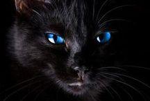 Cats - poezen