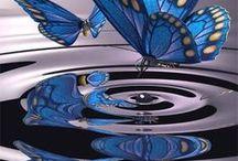 Butterfly / vlinders