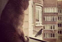 Кот - Трюфель / Cat, cat, cat, cat, cat .........