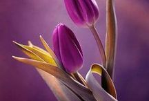 Flowers - Bouquet - Virágok-csokrok
