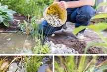 Gärtnern / Garten, Tipps, Pflanzen, vermehren, Pflege, Standort, Gartenwissen, Grundlagen, basics, gardening, know how, Tipps und Tricks