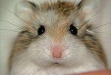 My true obsesión; hamster