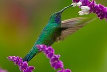 Hummingbirds / These beautiful birds are my moms favorite. I will always want them around me  / by Chante Brunker