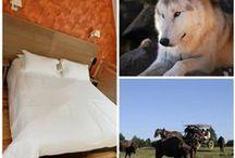 Séjour Lozère Animaux à gogo à l'hôtel les 2 rives en Lozère / les loups du Gévaudan, les bisons d'Europe, les ânes du mazel autant de bêtes à poil que vous allez découvrir durant votre séjour en Lozère. Animaux à gogo voila ce que vous propose l'hôtel les 2 rives dans ce séjour pacager #loupdugévaudant #bisonsd'europe #asineriedumazel #séjouranimauxàgogo #séjour lozère #les2rives