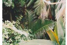HOJAS / LEAVES / nice pics with plantas