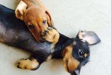 Puppies ♥︎