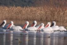 Montenegro Wildlife / Birds, the Big Five, and Domestic Wildlife