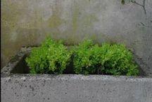 My little garden / Des photos de mon petit jardin de ville.