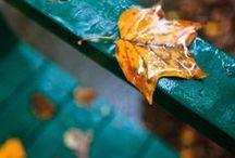 Fall Decor // Őszi dekorációk