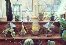 Plant Life // Indoor Garden / Terrariums, succulents, cacti, planting etc.