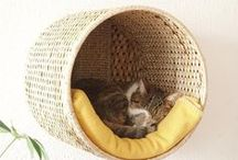 Cats // DIY / More ways to spoil my tabby.