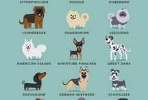 Coisinhas dogs
