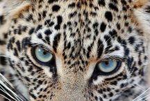 Animal print funkiness...