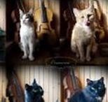 Our pets / 10 cats & a dog :-)  Nasze zwierzaki