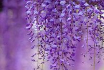 Shades of Purple / by Summer