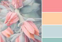 カラー / Color