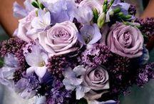 Hochzeit • Lila / Violet Hochzeitsfarbe / für eine Traumhochzeit in Lila / Violet