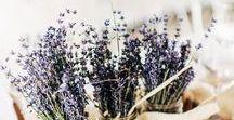 Hochzeit • Provence & Lavendel