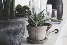 POTS / #pot #plants #style #design #pottery