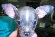 Divine Animal Hospital Vero Beach FL / Local Animal Pet Vet Vero Beach FL 32960