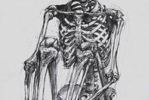 Stra Anatomistico