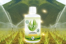 """Aloel / Boisson bien-être 87 % Gel d'Aloe Vera  Bio Nectar d'Agave """"Aguamiel"""" Miel  Aloel, c'est un goût délicieux et un geste quotidien pour retrouver une sensation de bien-être général."""