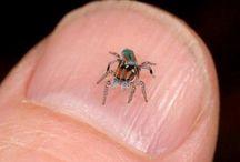 Spiders  / by Janice Jordan