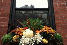 Fall Window Boxes / by Sarah Hunt